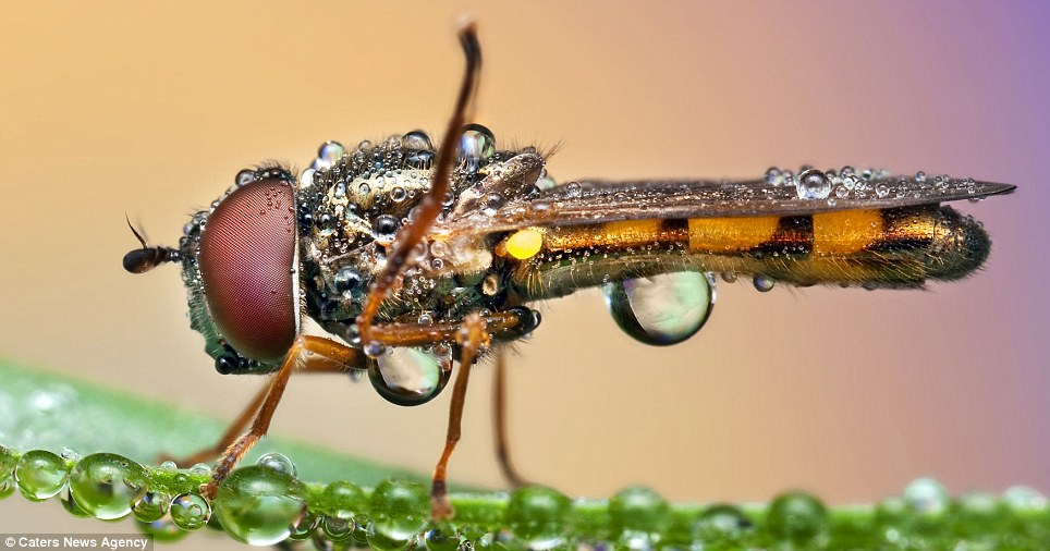 The photos show up the tiny details of the insects which are impossible to see through the naked eye