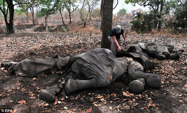 Security has been unable to prevent the massacre carried out by poachers on horseback from Sudan and Chad