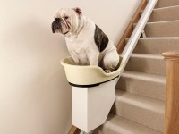 Stairlift for overweight dogs: No more walkies for ...