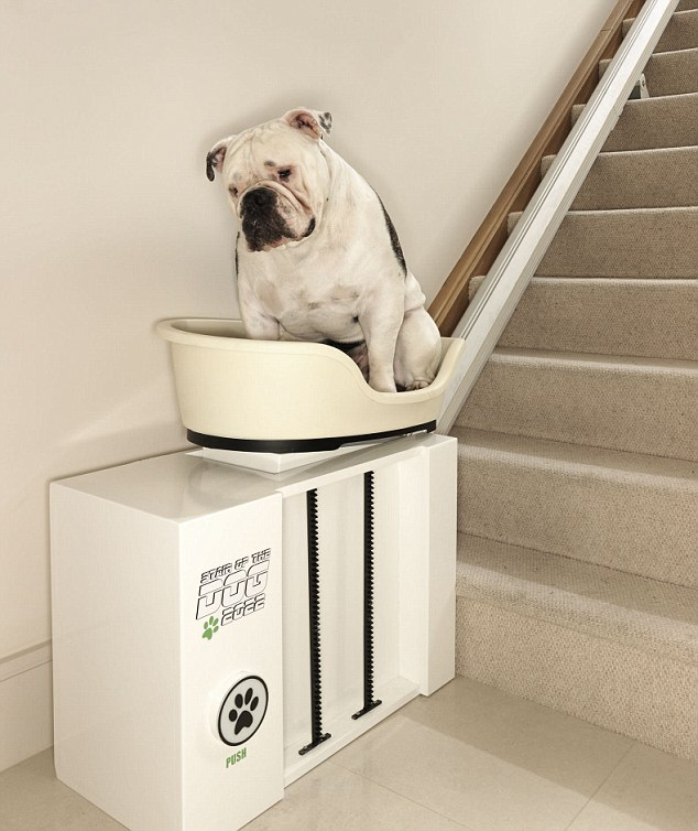 stair elevator chair lift fishing names stairlift for overweight dogs: no more walkies pedigree bums | daily mail online