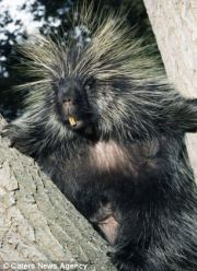 wild hilarious animal
