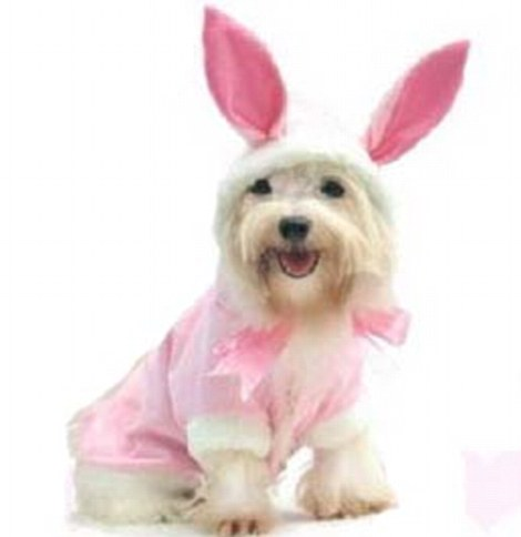 Dog fancy dress outfits for Easter on sale (but the poor