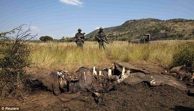 Rising trend: Elephant and rhino poaching is being driven by the growing purchasing power of the continent's newly affluent classes