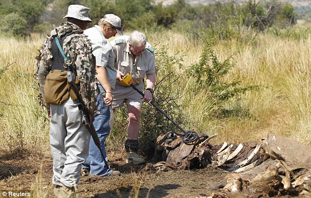 Massacred: Members of the Pilanesberg National Park Anti-Poaching Unit stand guard as conservationists and police investigate the scene of a rhino poaching earlier this month in South Africa