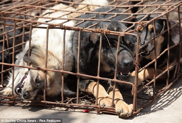 Deaths: Due to the terrible conditions a number of the dogs had already died by the time they were discovered