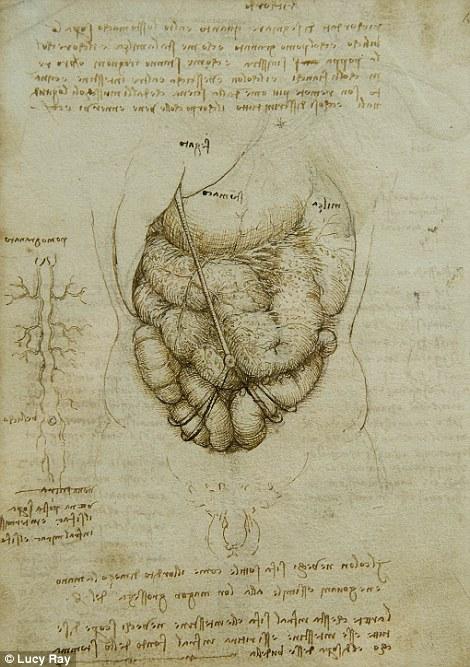 Dibujos anatomicos de Leonardo Da Vinci | Milenio