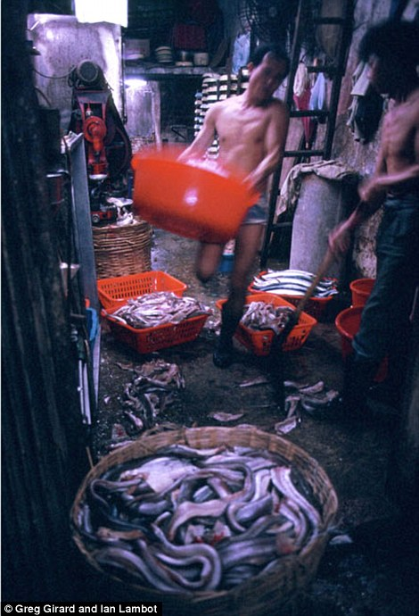 Workers in a fish market prepare eels and other fish for sale to people living in the city