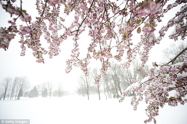 Snow in spring: The lowest temperature recorded overnight on Friday was in Scotland, where it plummeted to -6C