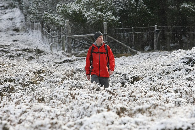 A hillwalker strolls though the snow-covered heather at Braemore near Inverness today