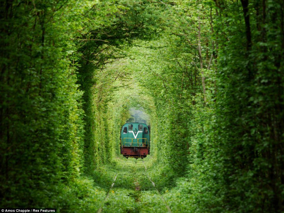 Un tren circula por el túnel de la línea ferroviaria privada del amor