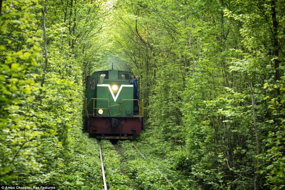 El túnel es en realidad una sección de tres kilómetros de ferrocarril privado que atiende a una cercana fábrica de tableros de fibra