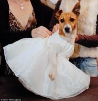 Barking mad? Registrar reveals how pet owners spend  ...
