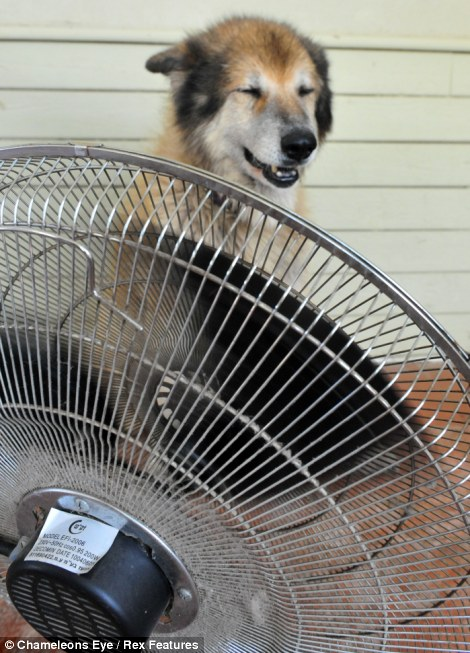 Spread the whirred: This chilled dog has found himself a new fan