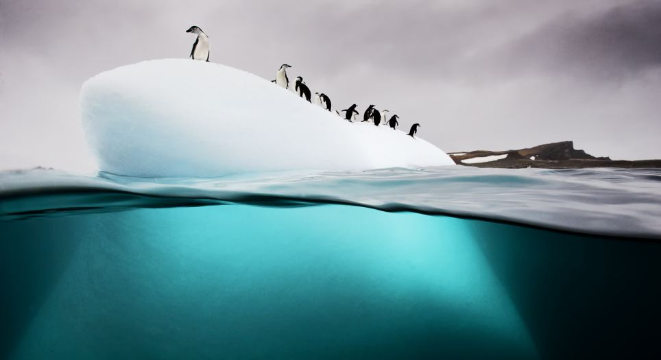 Happy feet: Chinstrap penguins survey their surroundings from the top of a 'bergy bit', or small ice floe, off Danko Island in the Antarctic Peninsula