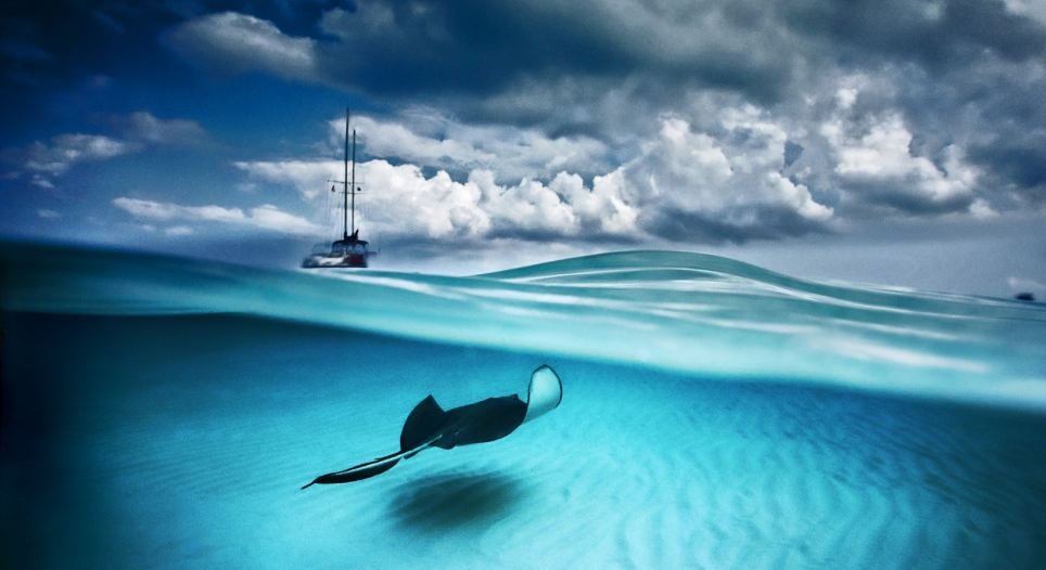 Between sea and sky: A southern stingray glides across the waved raked sands of North Sound bay, Grand Cayman island