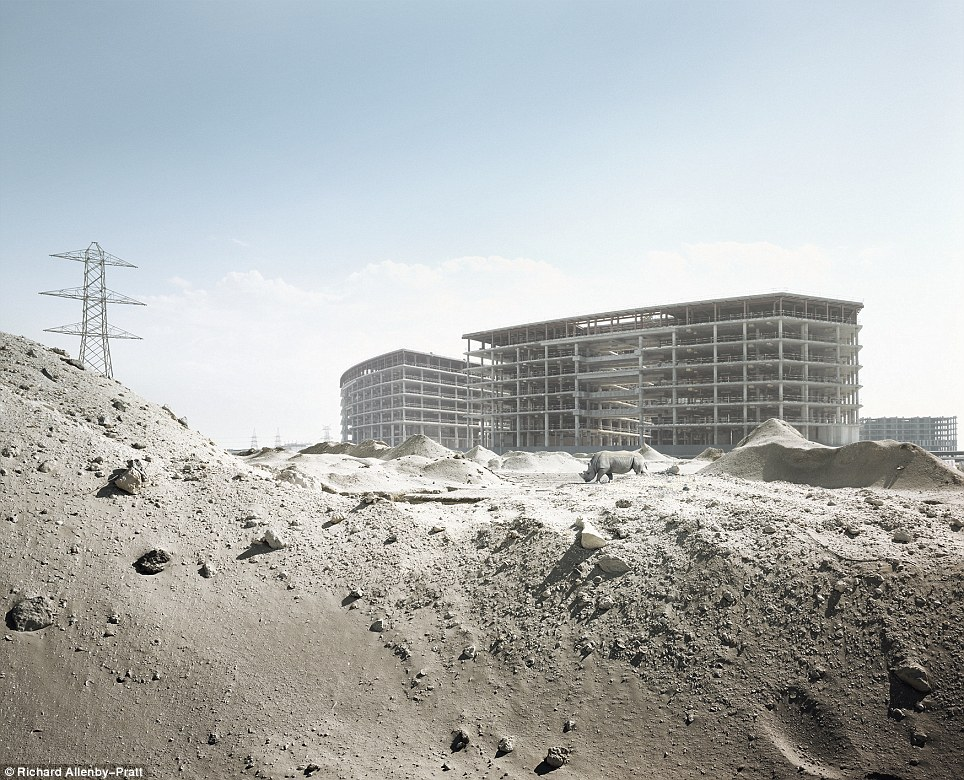 Strange visitor: A rhino walks in the sand at an abandoned building site
