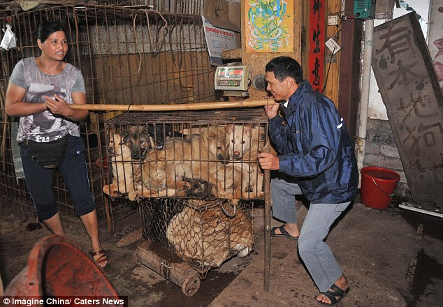 Takeaway: A cage full of dogs is lifted like just another type of cargo