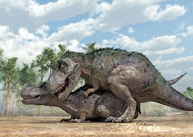 Tyrannosaurus rex dinosaurs mating - like most dinosaur species, the creatures mated like dogs