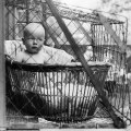 Odd it s difficult to see these baby cages getting past the eye of