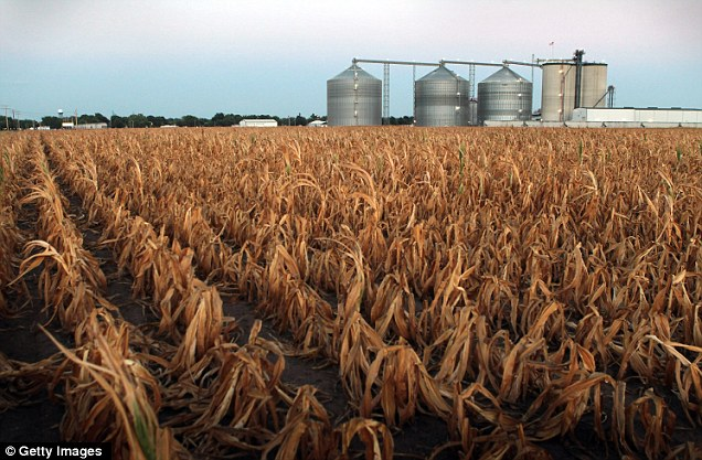 There has been a nearly threefold increase in areas of extreme drought in the course of a single week in the nine Midwestern states where three-quarters of the country's corn and soybean crops are produced