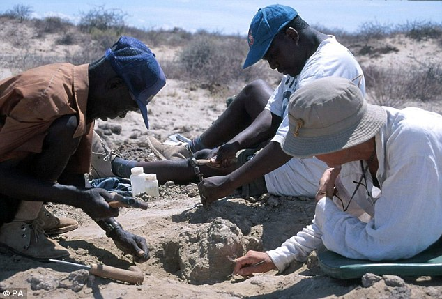 Discovery: Dr Meave Leakey (right) and members of her team excavating parts of a skull found in Northern Kenya in 2007
