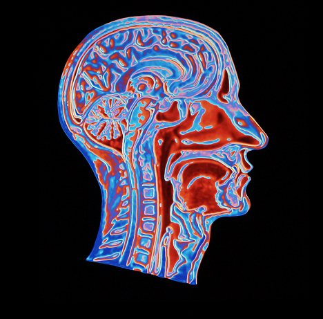 Researchers discovered the stem cells that form neurons in the part of our brain that deal with planning and creativity