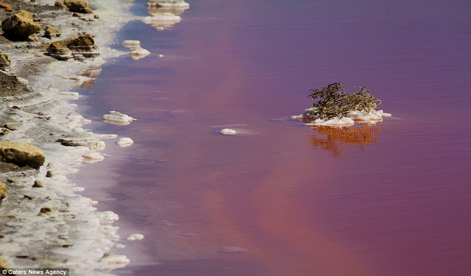 The water has been transformed into a deep shade of red by high levels of salt