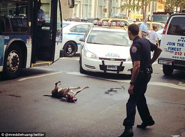 Tragic pooch: The pit bull was shot on 14th Street in New York City