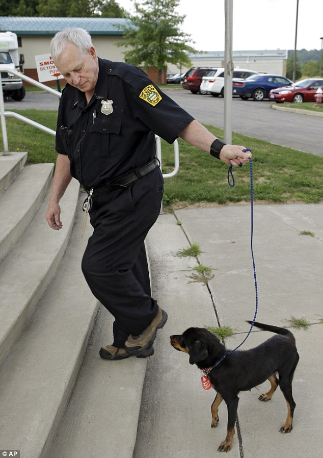 Dog warden Larry Galvin walks 'Chessie' back into the Cuyahoga County Animal Shelter in Cleveland Wednesday, Aug. 15, 2012