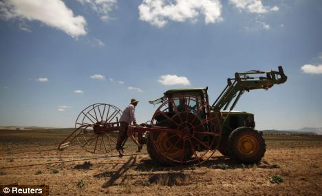 Marinaleda's cooperative farmers use a tractor to prepare the irrigation system for growing artichokes