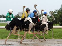 7 Fun Facts About Ostriches