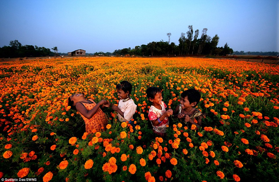 Children laughing in a field of marigold flowers in Panskura, West Bengal, India. The picture won the Families category in the worldwide photography competition