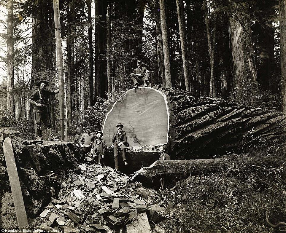 1915 era loggers of Northern CA