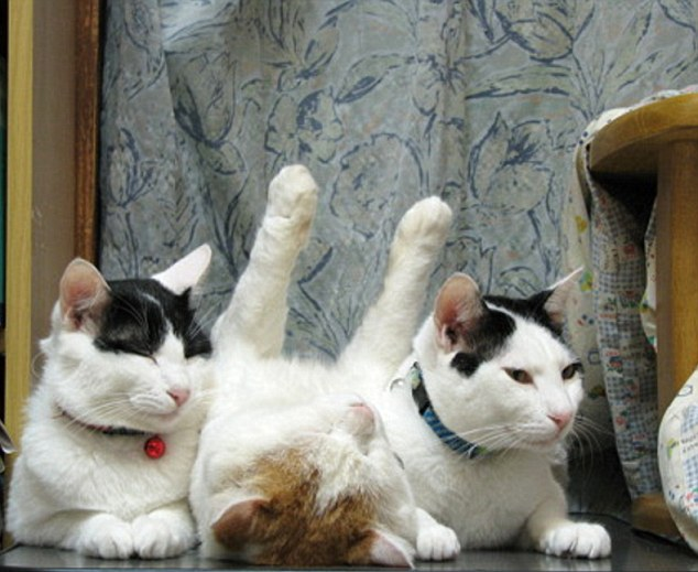 The stretch: Held in place by two other cats serving like the ends on a book shelf, a middle cat slumbers with its arms stretched toward the sky