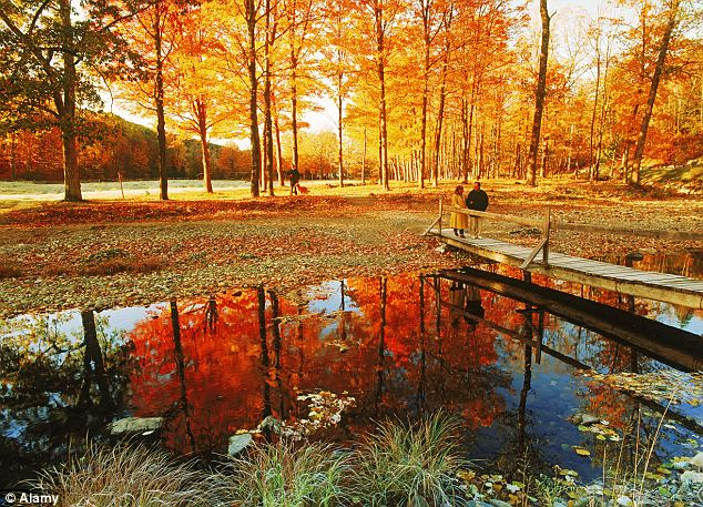 Hd Wallpaper Fall Leaf Change Stunning Photographs Capture Fall Scenes At Their Golden