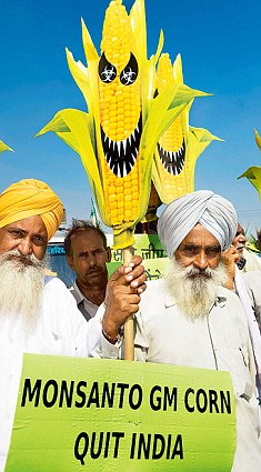 Farmers protest against Monsanto's GM corn
