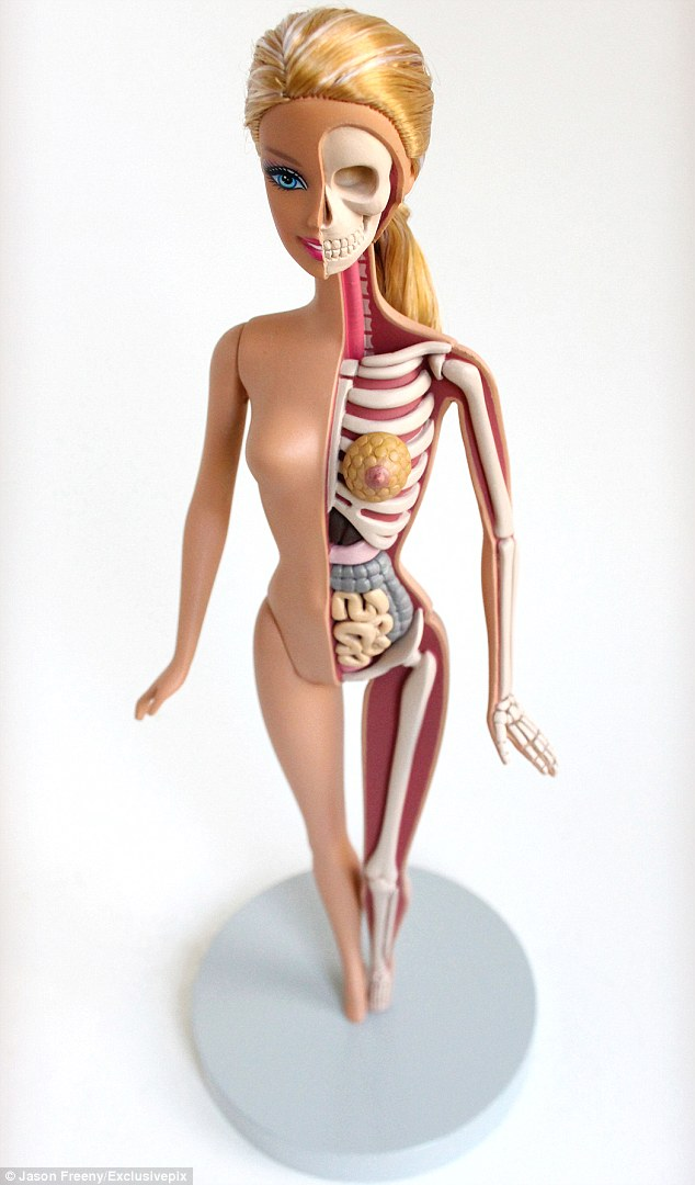 Jason Freeny Anatomical sculpture of Barbie reveals how