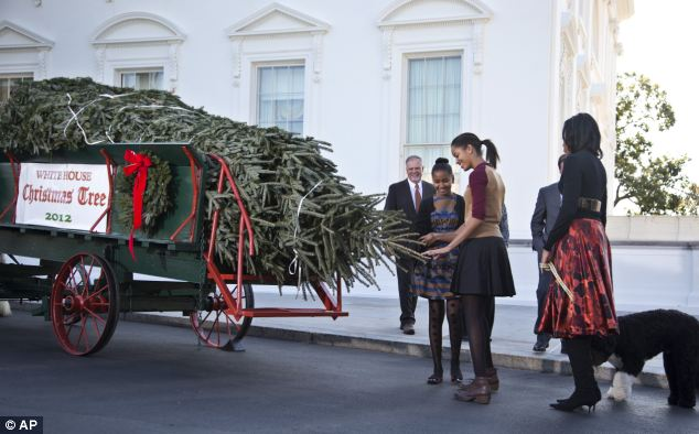 Inspection: Sasha and Malia Obama inspect a 19-ft fir tree from North Carolina that will become their Christmas tree at the White House, as their mother and Bo the dog look on