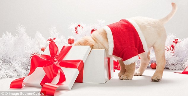 Christmas Pets Get More Presents Than Partners Say Pets