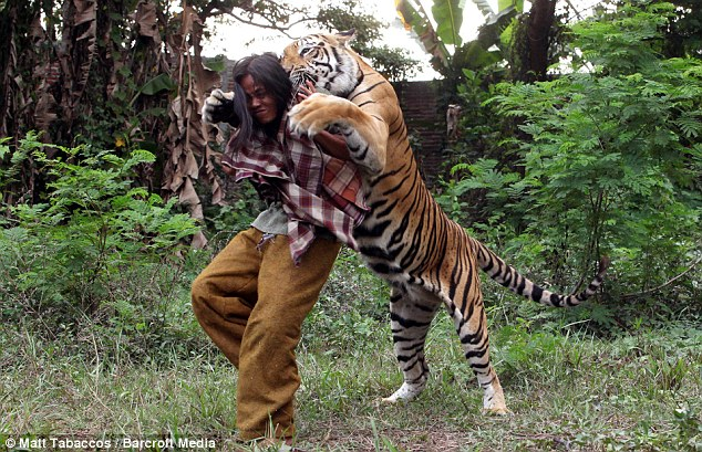 Bond: Mr Sholeh now cares for the tiger full-time for owner Noer Mohammaed Sholeh - and has become affectionately known as the tiger nanny