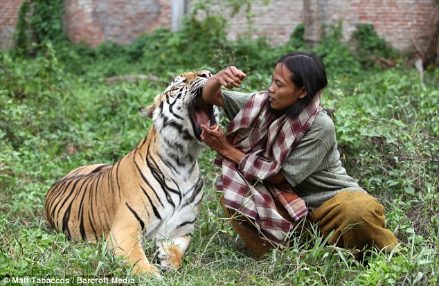 Playful: Bengal Mulan is even known to 'mock attack', hug and kiss her companion when they play in the garden behind their home
