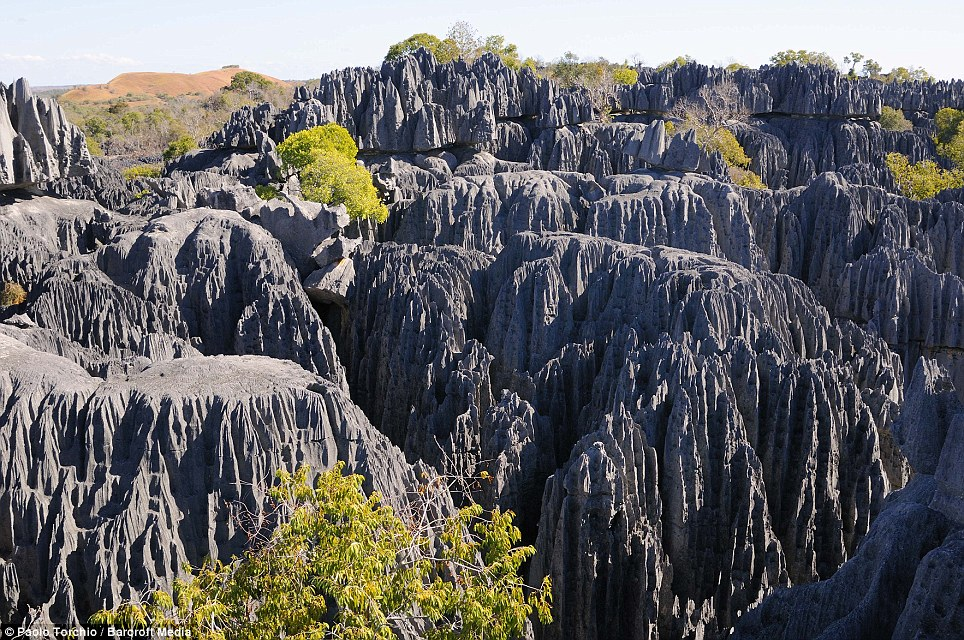 Another shot of the stunning karst limestone formation known as Tsingy. Despite the inhospitable appearance the jagged rocks are home to numerous species of plants and animals
