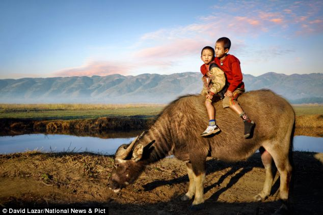 Two brothers in rural Myanmar sit on the back of a buffalo owned by their family. They ride on the back of the buffaloes when taking them out into the fields for work