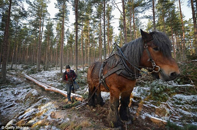 Beautiful pictures of fulltime horse loggers removing
