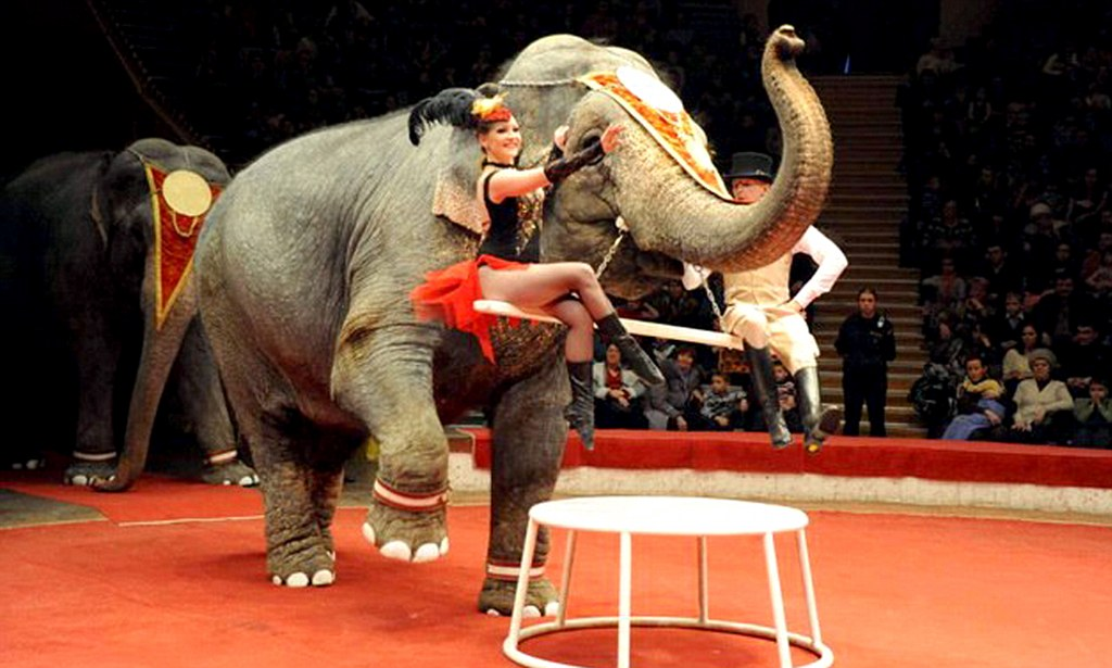 Russian Circus Elephants Saved From Dying In The Siberian