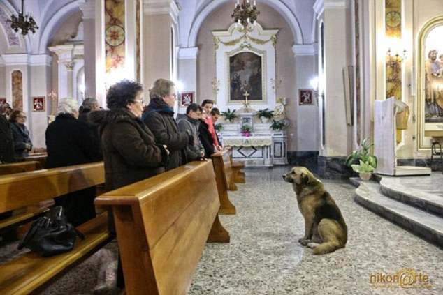 Pining: Tommy the German Shepherd waits faithfully during Mass at the church where his owner Maria Margherita Lochi's funeral was held