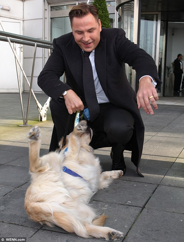 New pal: David seemed to be having a whale of a time as he played with trainee guide dog Travis as the judges left their hotel in Cardiff