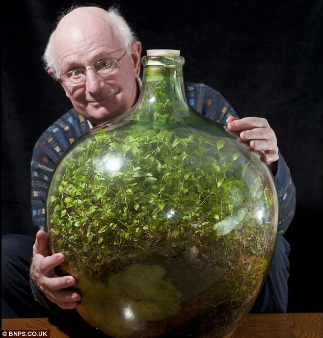 Still going strong: Pensioner David Latimer from Cranleigh, Surrey, with his bottle garden that was first planted 53 years ago and has not been watered since 1972 - yet continues to thrive in its sealed environment