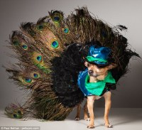 peacock dog 600 outfits and 15 costume changes in an hour