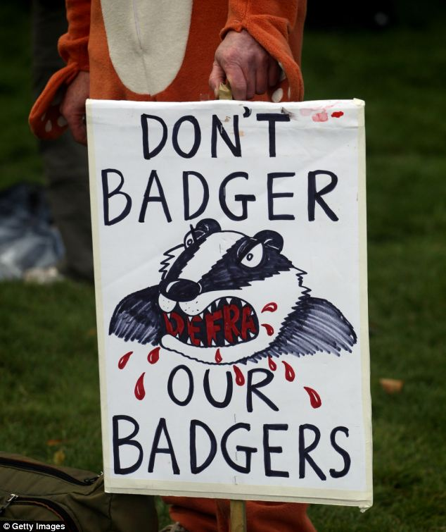 Protestors against the badger cull have held a series of rallies, but some hardline opponents have threatened ministers and farmers